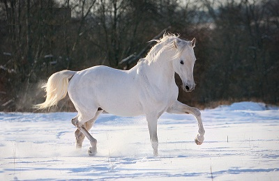 Конь на снегу