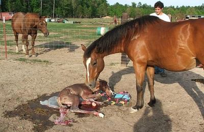 Новорожденный коник