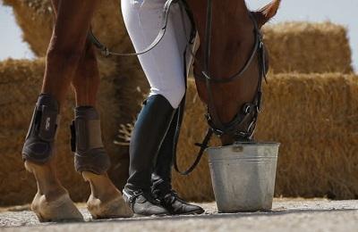 Конь пьет