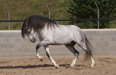 Серый конь