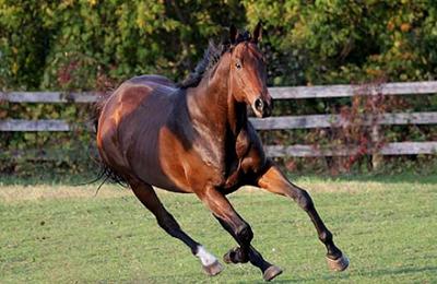 Бегущий конь