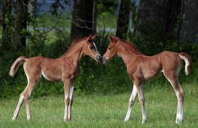 Маленькие кони