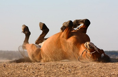 Конь на земле