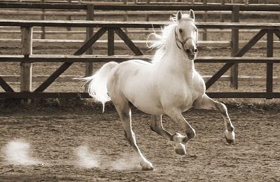 Конь в бегу