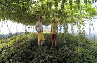 Выращивание лозы