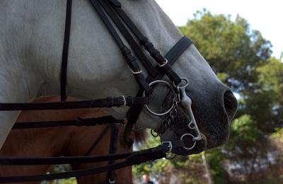 Загнузданый конь