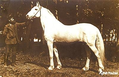 Конь Крепыш