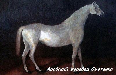 Жеребец Сметанка