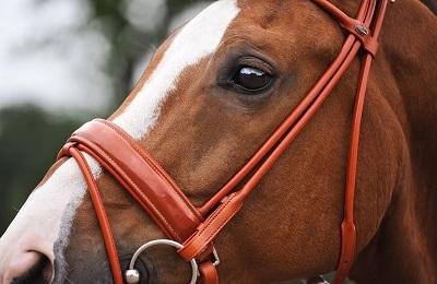 Конь в упряже