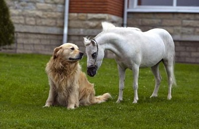Конь и пес