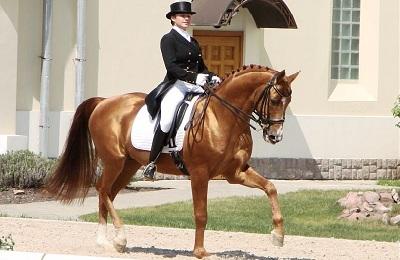 Управление конем