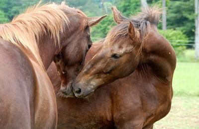 Знакомство коней