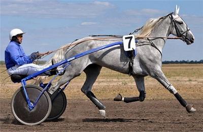 Конь в упряжке