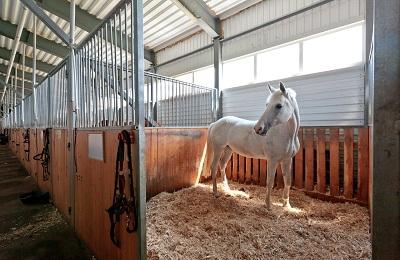 Конь в стойле