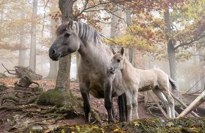 Лесной конь
