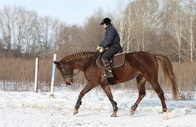 Конь с наездником