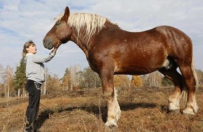 Большой конь