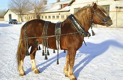 Запряженный конь