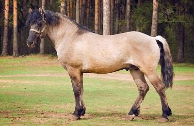 Бежевый конь