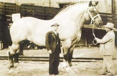 Сильный конь