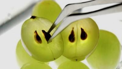 экстракт из косточек белого винограда