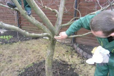 Осмотр коры дерева