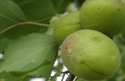 Поражение плода