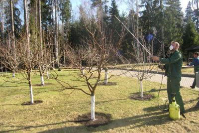 Весеннее опрыскивание яблонь