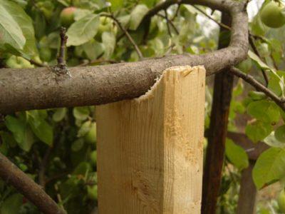 подпорка для яблони