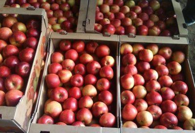 Яблоки в ящике