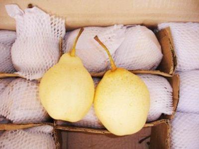 Китайская груша в коробке