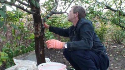Заделка дупла в дереве