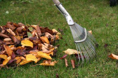 уборка опавшей листвы