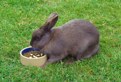 Cпециальные витамины для домашних кроликов