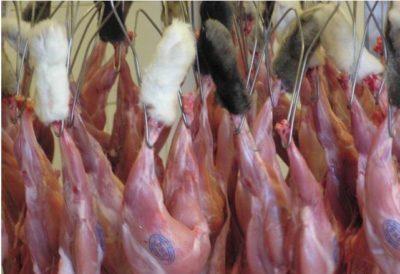 Пути реализации кроличьих тушек