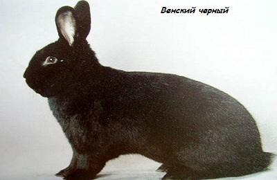 Венский черный