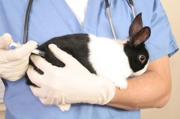 Схема прививок для кроликов