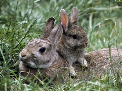 Зайчиха с зайчонком