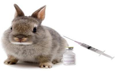 Подготовка к вакцинации кроликов
