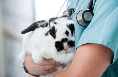 Подкожная вакцинация кроликов