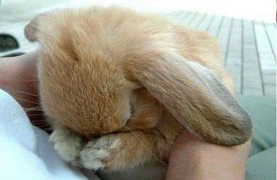 Опасность для кроликов