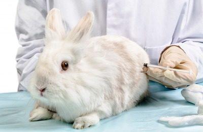 комплексная иммунизация кроликов