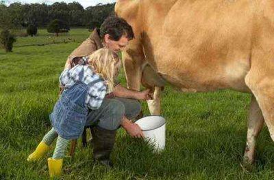 Доить корову в поле