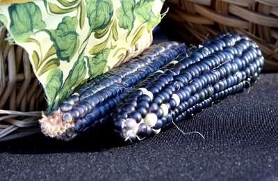 Синяя кукуруза