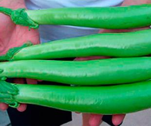 Зеленый баклажан