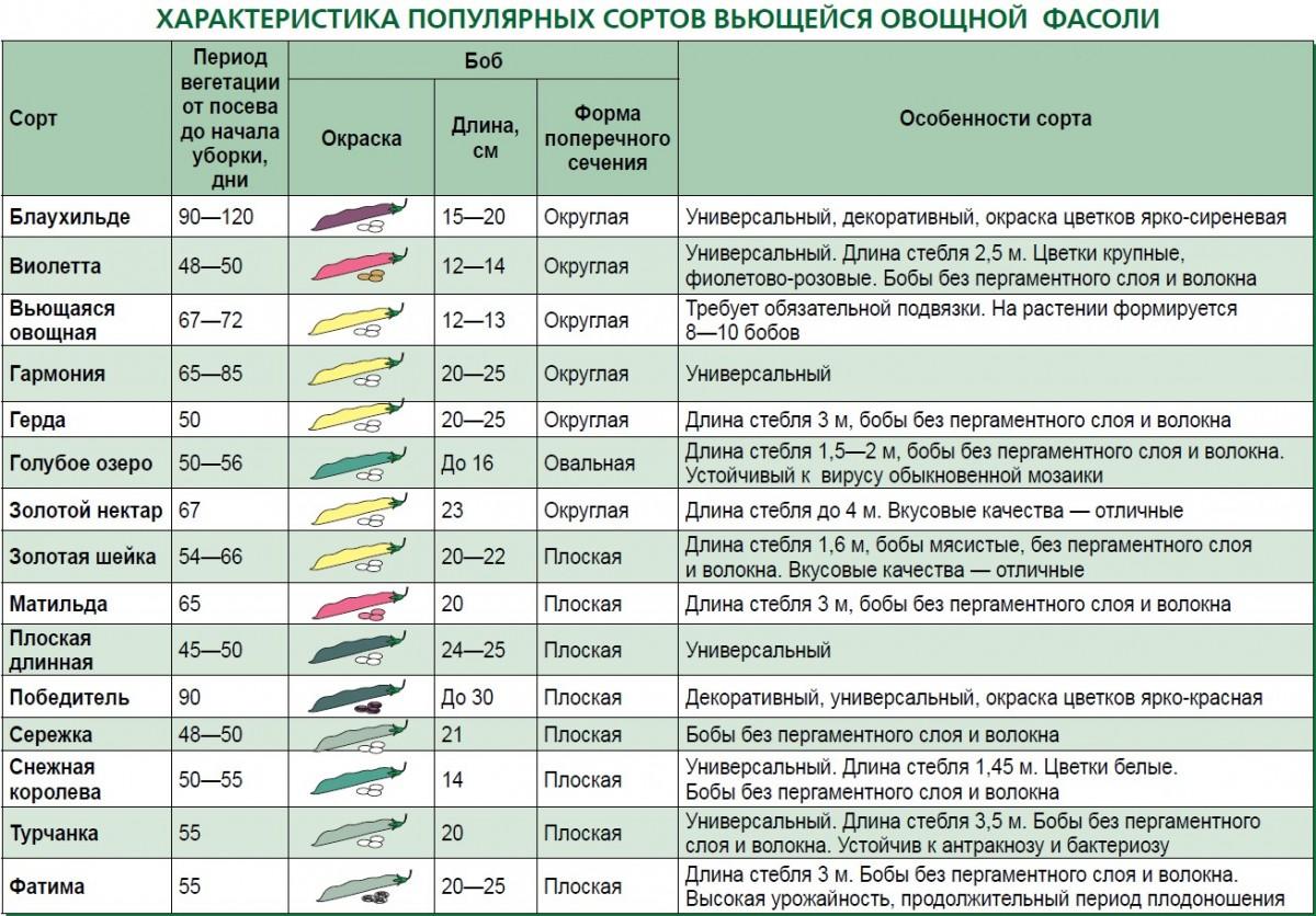 Характеристика популярных сортов фасоли