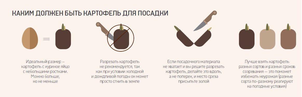 Характеристика картофеля для посадки