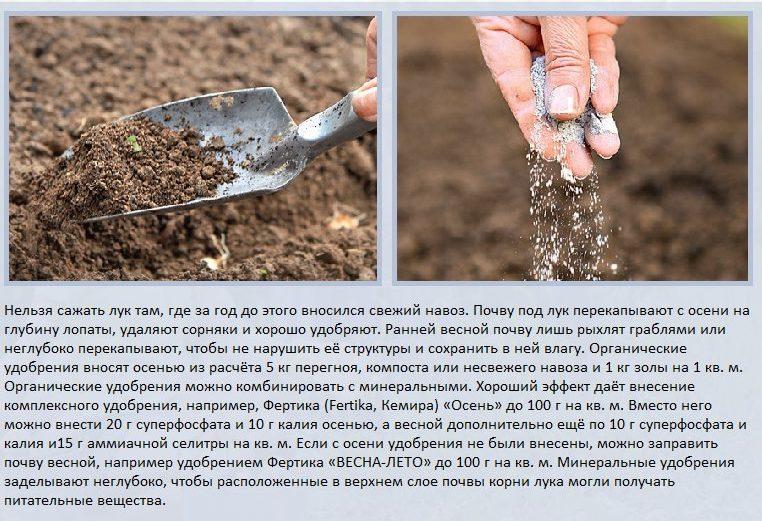 Подготовка почвы под посадку лука