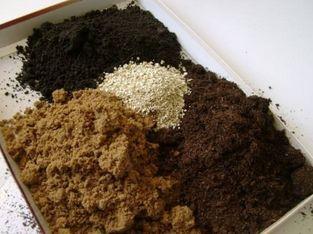 состав грунта для рассады